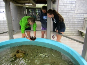 One of the aquarium interns shows some visitors a horseshoe crab