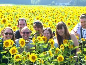 Sunflower festival in Takanabe